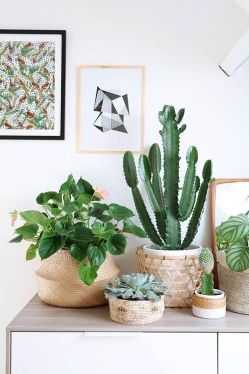 54 Plantas para Sala que vão Dar Vida ao Ambiente!