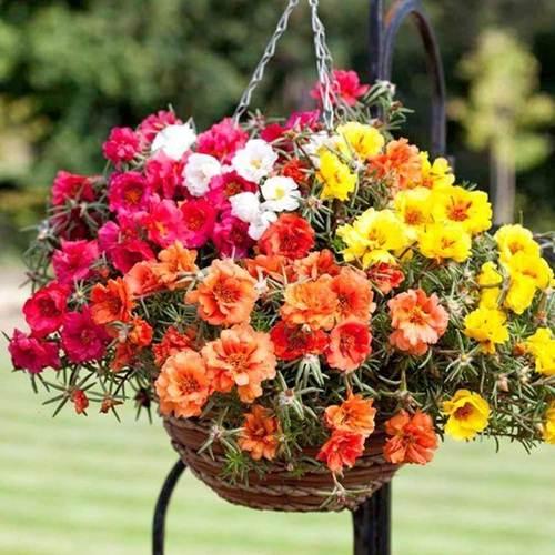 42 Flores para Jardim para Todos os Climas!